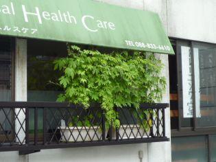 窓に「ゴーヤ・カーテン」ができました。 高知市桟橋通 マッサージ 指圧 鍼治療院・サロン あんま、鍼、灸てあて所